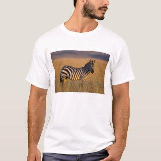 Camiseta Quagga do Equus da zebra das planícies) na grama,