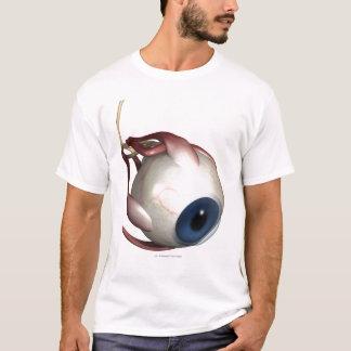 Camiseta Rendição realística dos músculos do olho