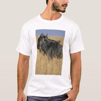 Camiseta Reserva do jogo de Kenya, Mara do Masai,