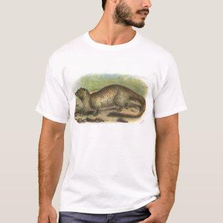 Camiseta Richard Lydekker - mangusto egípcio