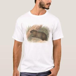 Camiseta Richard Lydekker - Wombat tasmaniano