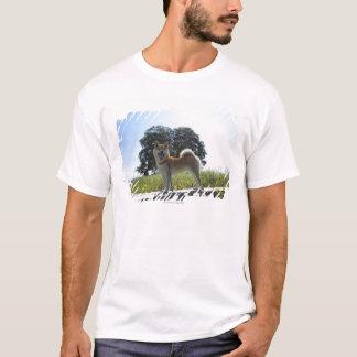 Camiseta Shiba Inu