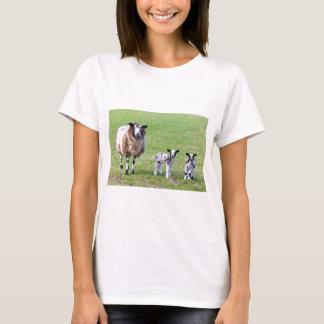 Camiseta Sira de mãe a carneiros com os dois cordeiros