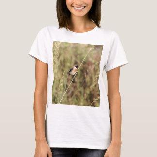 Camiseta Stonechat comum (torquatus do Saxicola)