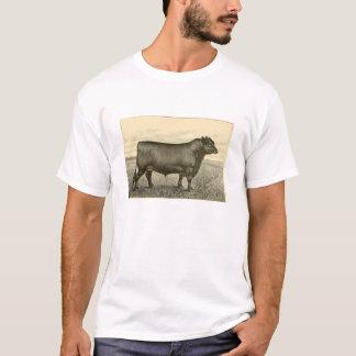 Camiseta T-shirt de Aberdeen Angus