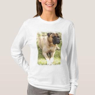 Camiseta T-shirt longo da luva das senhoras inglesas do