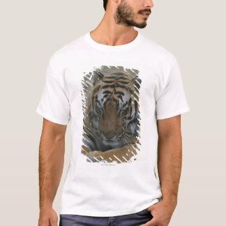 Camiseta Tigre do sono