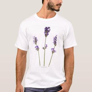 Camiseta Três hastes de flores roxas inglesas da lavanda,