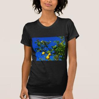 Camiseta Três limões sicilianos