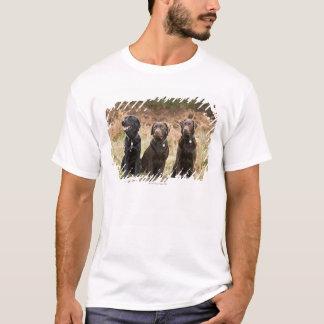 Camiseta Três retrievers de Labrador pretos