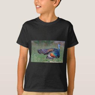 Camiseta Turquia Ocellated em Guatemala