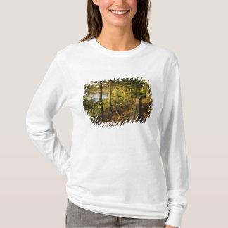 Camiseta Uma passagem de madeira no parque nacional Maine