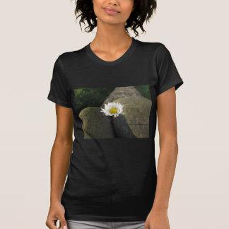 Camiseta Única flor da margarida branca entre as pedras