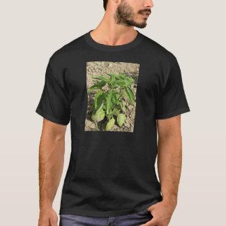 Camiseta Única planta fresca da manjericão que cresce no