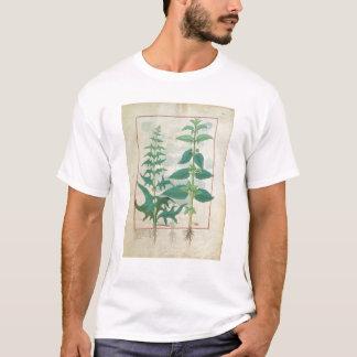 Camiseta Urticaceae