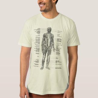 Camiseta Vintage - a anatomia humana Muscles vistas
