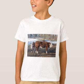 Camiseta Vitelas de Hereford no prado do inverno com neve