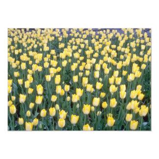 campo amarelo de flores amarelas das tulipas convites