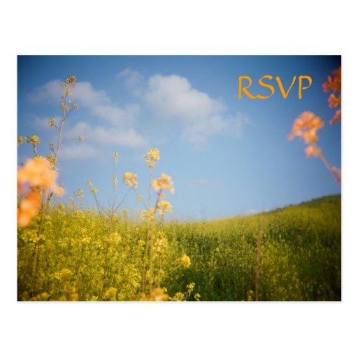 Campo de flor do cartão de RSVP Cartões Postais