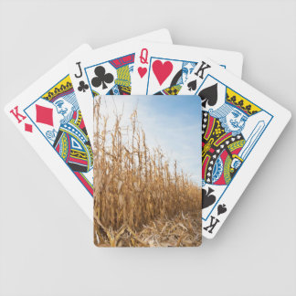 Campo de milho em parte colhido baralhos de carta