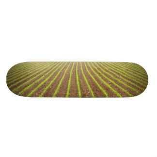 Campo de milho shape de skate 21,6cm