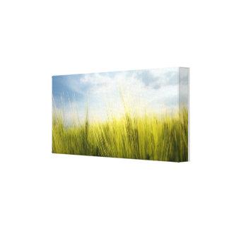 campo de trigo impressão em tela