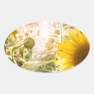 Campo ensolarado do girassol adesivo oval