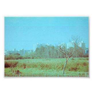 Campo verde impressão de foto