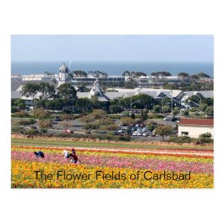 Campos de flor do cartão de Carlsbad