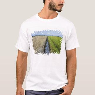 campos no meio do arroz do canal de irrigação camiseta