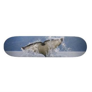 Canadá, Columbia Britânica, ilha de Vancôver, Shape De Skate 18,4cm