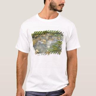 Canadá, Columbia Britânica, parque nacional de Camiseta