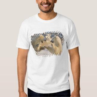 Canadá, Manitoba, baía de Hudson, Churchill. 8 Camiseta