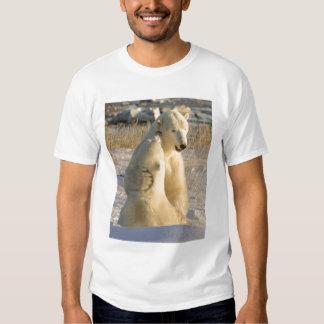 Canadá, Manitoba, baía de Hudson, Churchill. T-shirts