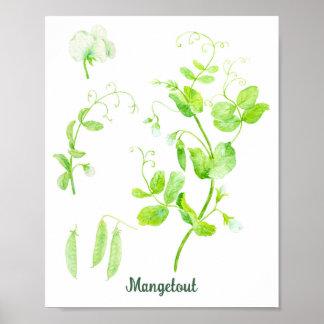 Candonga de Mange do poster de Mangetout do jardim Pôster