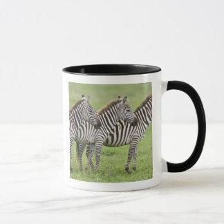 Caneca África. Tanzânia. Zebras na cratera de Ngorongoro