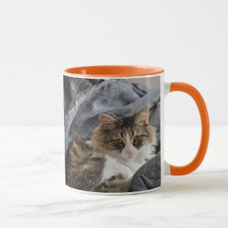 Caneca Agrida o gato/laranja longos cinzentos do cabelo