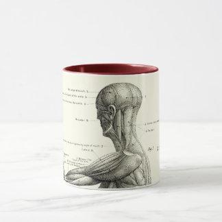 Caneca Anatomia humana, músculos do corpo humano