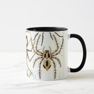 Caneca Aracnídeos por Ernst Haeckel, aranhas do vintage