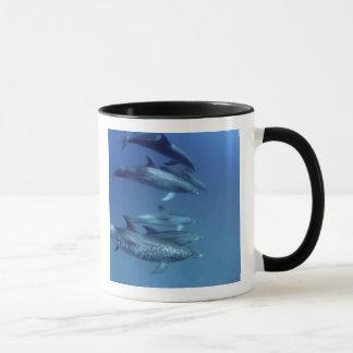 Caneca Atlântico manchou golfinhos. Bimini, Bahamas. 5