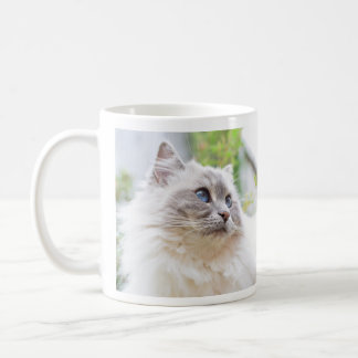 Caneca bonito do gato de Ragdoll