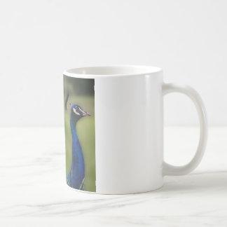 Caneca branca clássica da foto do pavão