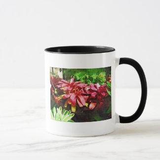Caneca bromeliad tropical, jardim tropical de Fairchild,