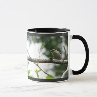 caneca Brown-dirigida do pica-pau-cinzento