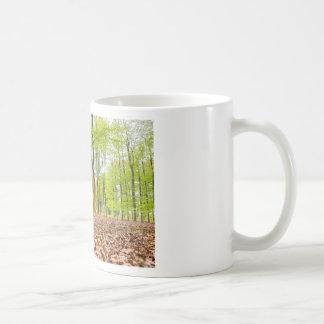 Caneca De Café A mulher senta-se com o espelho na floresta