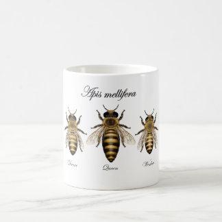 Caneca De Café Abelha européia do mel (mellifera dos Apis)