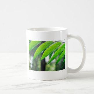 Caneca De Café Ailanthus Defocused e borrado do ramo
