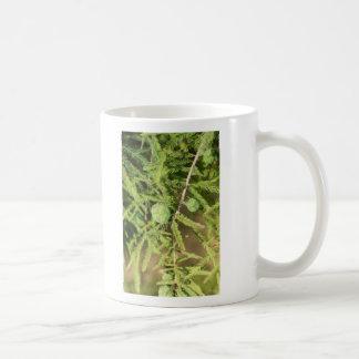 Caneca De Café Cone da semente de Cypress calvo