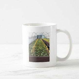 Caneca De Café Cultivo da estufa da flor do japonica da camélia