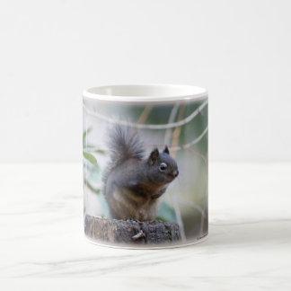 Caneca De Café Cumprimento do esquilo